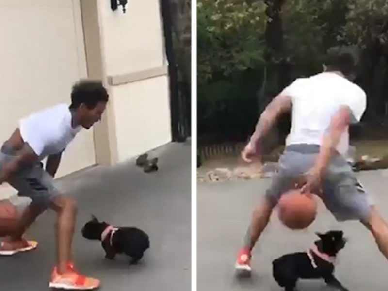 Trae Young Crosses Up Cute Dog In Hilarious Driveway Vid
