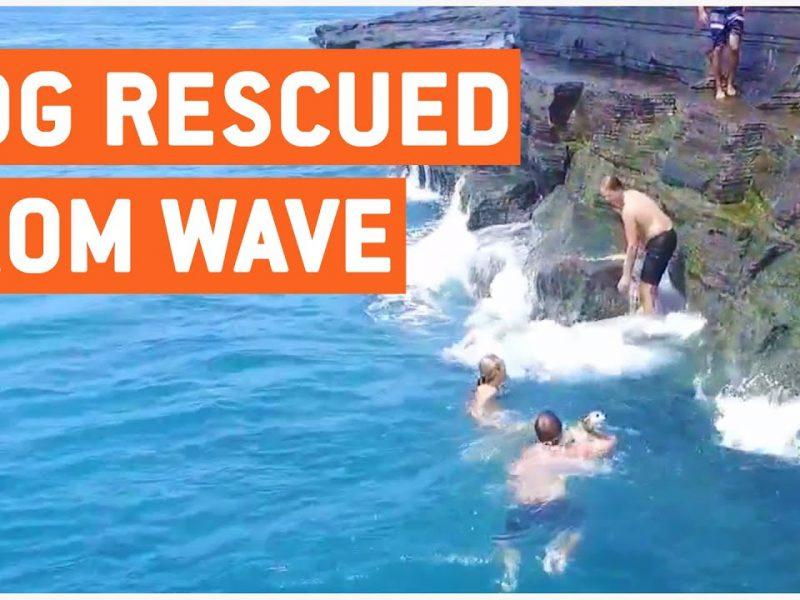 Dog Rescued from Huge Waves | Big Hero