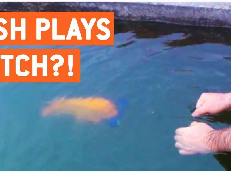 Fish Plays Fetch Like A Dog