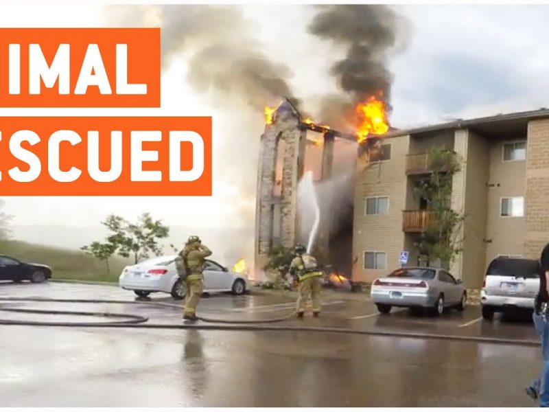 Guys Save Animals From Burning Apartment