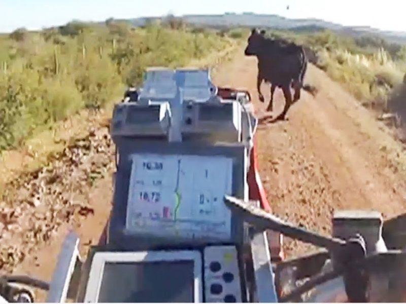 ATV Rider Hits Cow | #ThrowbackThrursday