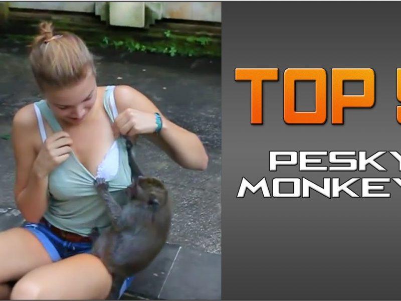#Top5 Pesky Monkeys | JukinVideo Top Five
