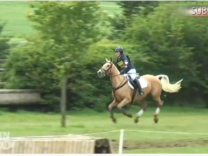 Horse Gets Revenge on Rider