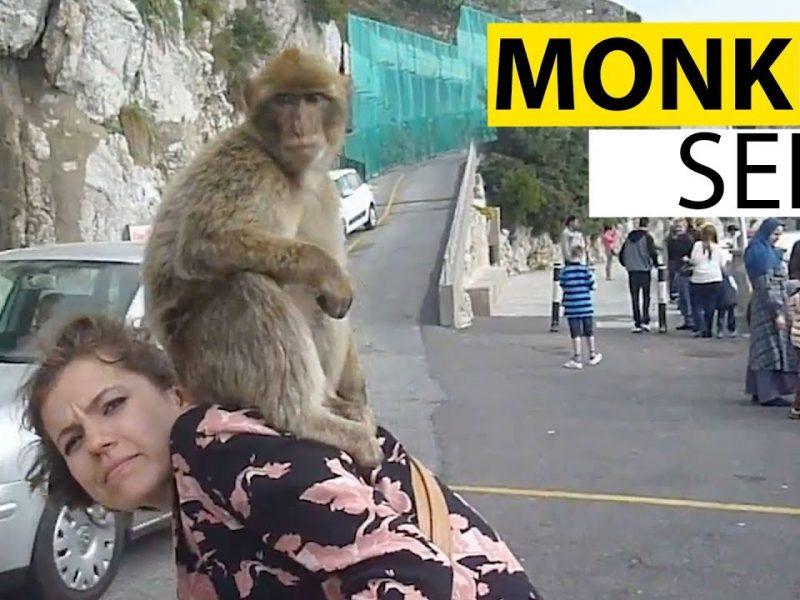 Monkeying Around   Funny Monkey Video Compilation